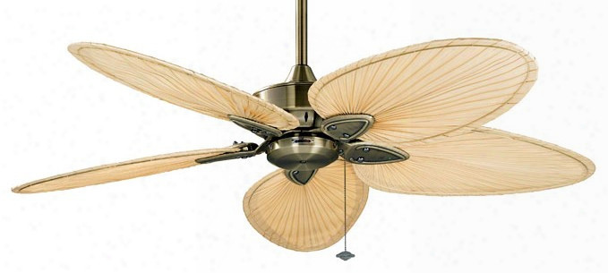 Fanimation Windpointe Ceiling Fan In Antique Brasss With Palm Blades