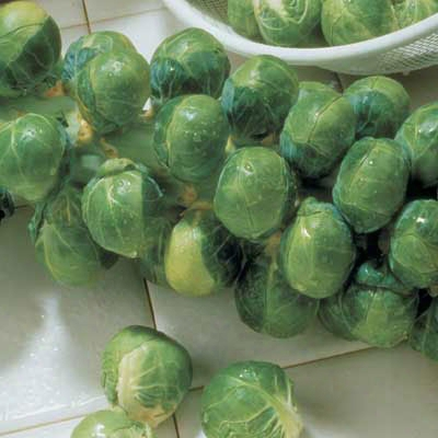 Long Island Brussel Sprout