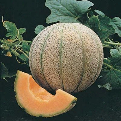 Magnifisweet Muskmelon