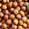 American Filbert Hazelnut