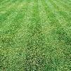 Flash Patch Lawn Repair