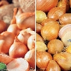 Red & Yellow Shallot Collection
