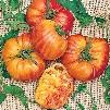 Flame Tomato