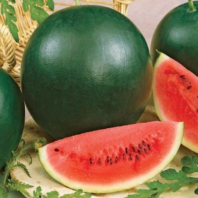 Splendor F1 Hybrid Watermelon